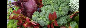 Broccolibukett