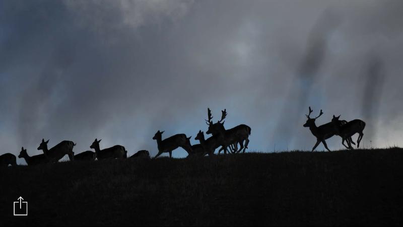 hjortar-på-höjd